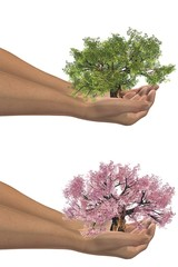 High resolution conceptual green and pink trees held in hands