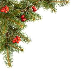 corner, branch of fir and dried red berries