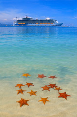 lots of starfish in the caribbean and a cruise ship