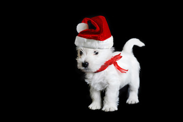 white puppy with  red ribbon