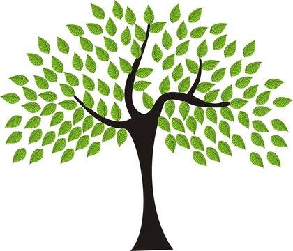 Whimsy Evergreen