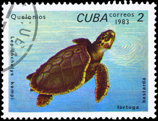 CUBA - CIRCA 1983 Olive Ridley