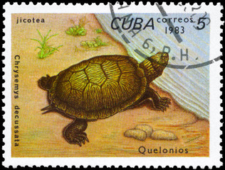 CUBA - CIRCA 1983 Painted Turtle