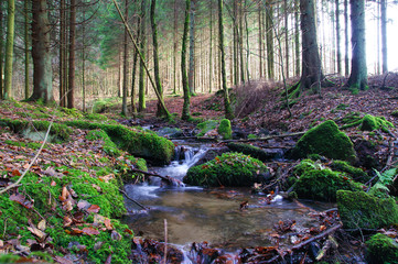 Photo sur Plexiglas Rivière de la forêt Little creeck in the Belgian Ardennes