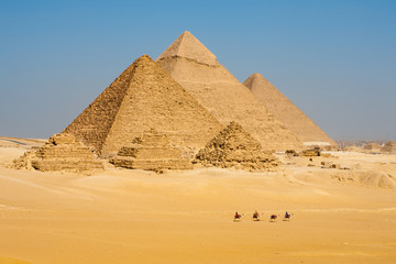 Photo sur Aluminium Egypte Camels Line Walk Pyramids All