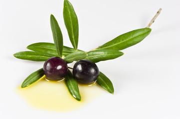 Zweig mit Oliven isoliert vor weissem Hintergrund