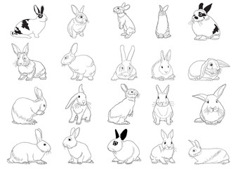 Set of rabbits isolated on white
