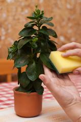 Fototapeta pielęgnacja rośliny obraz