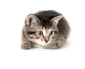 Kitten laying on white background