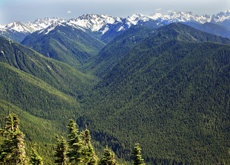 Snow Mountains Hurricane Ridge Olympic National Park Washington