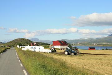Lofoten's farm and hay bales