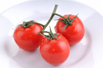 White background studio image of wet fresh tomatoes.