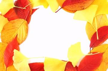 紅葉した落ち葉の背景