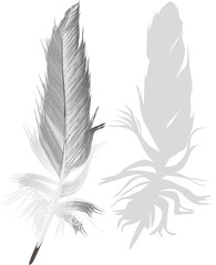 gray feathers with shadow