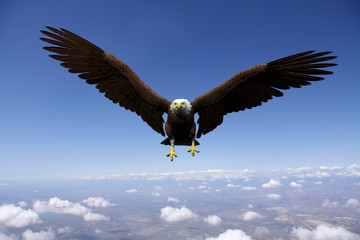 Fototapete - eagle flying for freedom