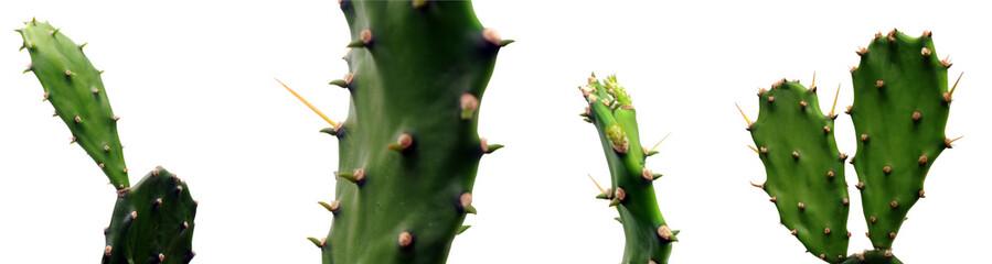 Fototapeta kaktus obraz