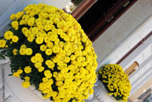 gelbe blumen stockfotos und lizenzfreie bilder auf bild 27992990. Black Bedroom Furniture Sets. Home Design Ideas