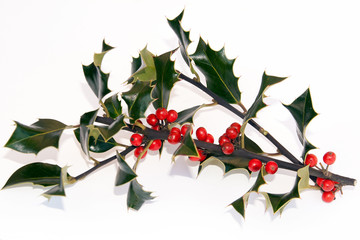Sprigs of Holly