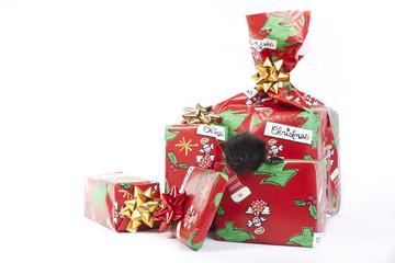 dolce gattino tre i regali di natale