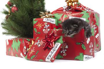 gattino che esce dal regalo