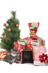 cuccioli di gatto regalati