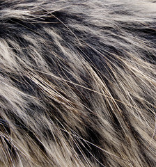 Background of fur for works of art