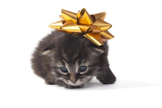 un regalo cuccioloso