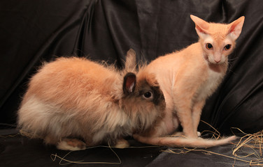 rabbit and cat