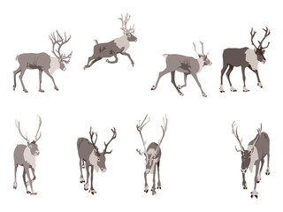 set of eight reindeer colored illustration