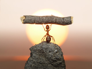 Statue of Labour, 150 million years of ants civilization