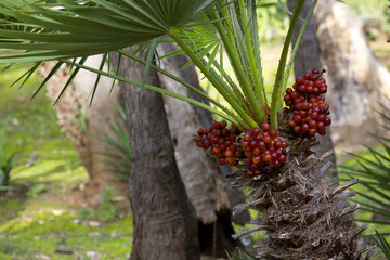 Particolare di palma mediterranea