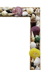 Frame with many different seashells
