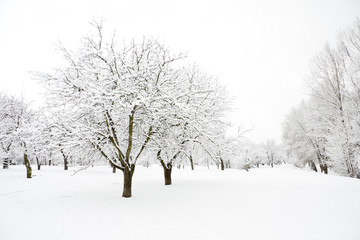 Trees in park covered by snow in winter day