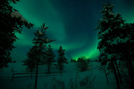 Aurora and trees