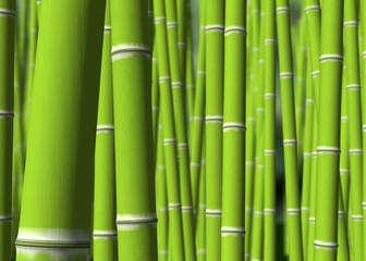 Poster Bamboe bosque bambu