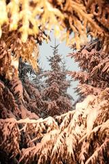 Tannenbaum mit natürlicher Rahmung orange