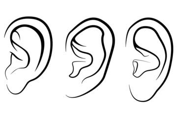 menschliches Ohr
