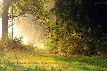 alba paesaggio 1277