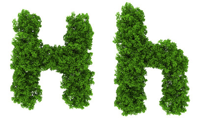 on top view tree forest high detail font