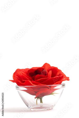 rose im glas stockfotos und lizenzfreie bilder auf bild 28136523. Black Bedroom Furniture Sets. Home Design Ideas