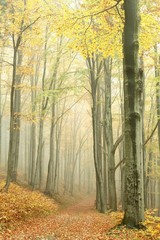 Keuken foto achterwand Bos in mist Mountain trail in the misty autumn forest in a nature reserve