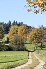 Feldweg zwischen Wiesen