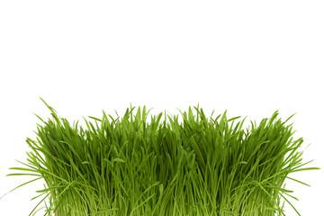 Bunch of green spring grass