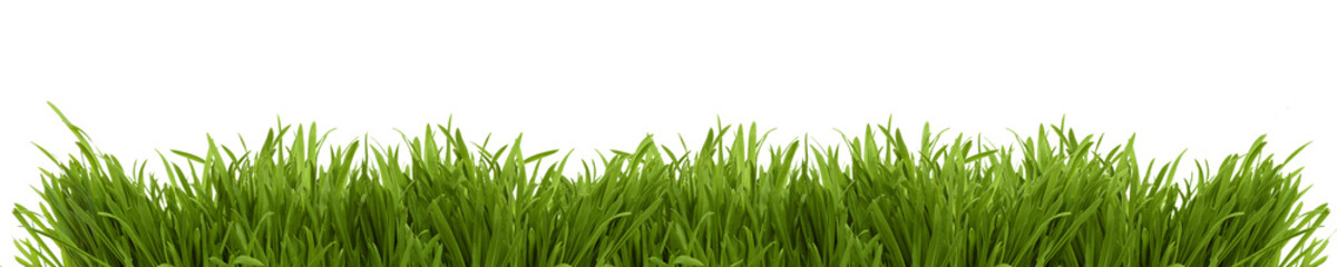 Wide image of a fresh spring grass