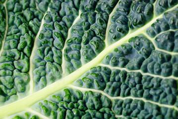 Cabbage leaf texture