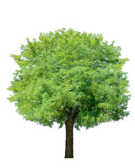 idyllic tree isolated