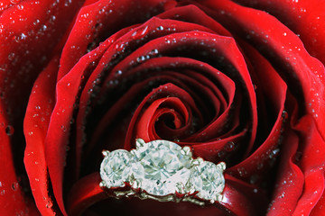 Engagement Ring Inside of Red Rose