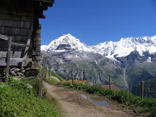 Swiss beauty, Wetterhorn from the path under Faulhorn
