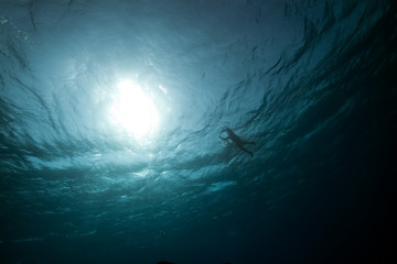 snorkler and ocean.