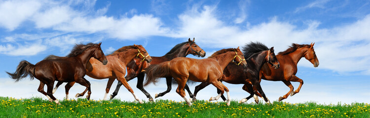 Wall Mural - herd gallops